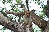 树上可爱的猴子