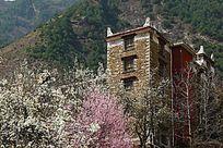 四川丹巴甲居乡开满花的房前