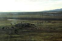 西藏蓝天白云大草原大气山河牛群