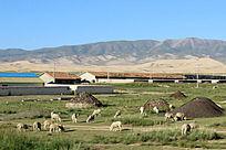 西藏蓝天白云大气山川羊群