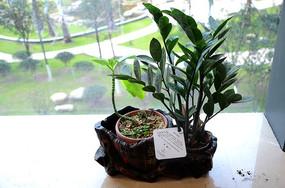 窗台上的绿色植物