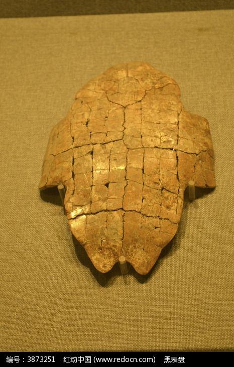 刻辞龟甲图片,高清大图 文物古董素材图片