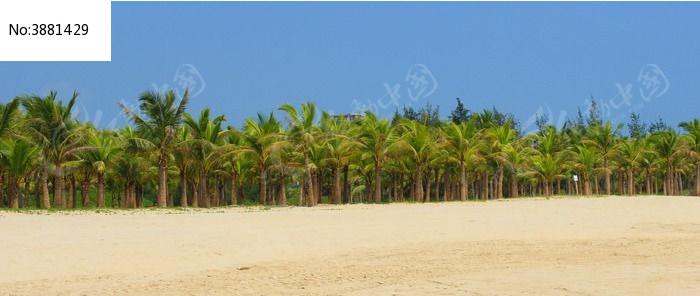 海边茂密的椰树林图片,高清大图_海洋沙滩素材