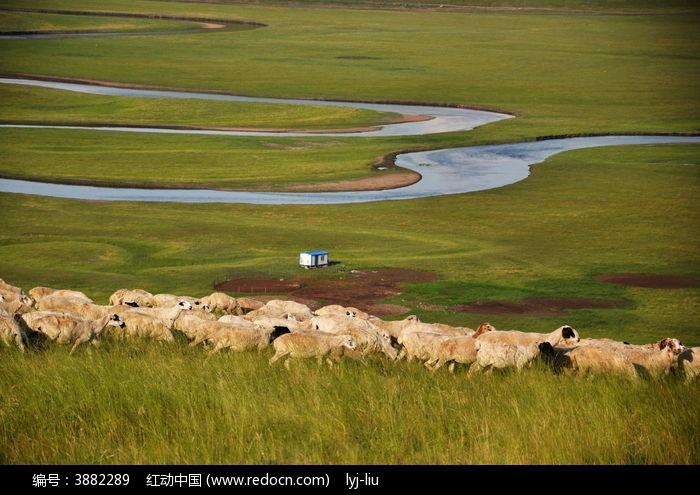草原羊群河流图片, 高清 大图
