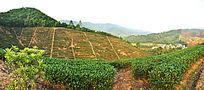 茶山全景图