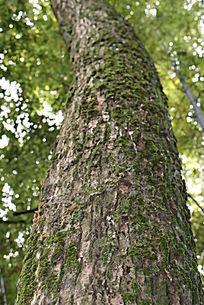 老树皮花纹肌理