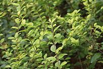 绿色植物花卉苗木地