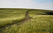 行走于大草原