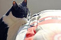 床头的小猫