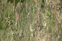 树皮纹路苔藓