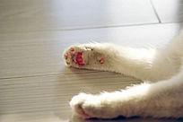 小猫爪子特写