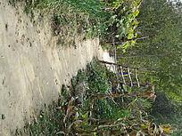 农家院落小路