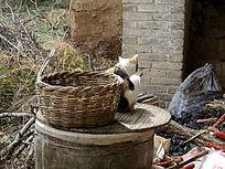 小猫与竹篮