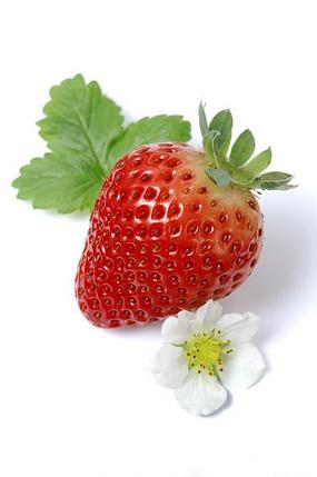 一花一叶草莓特写