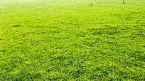 绿草地纹理