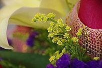 一枝黄莺花与玫瑰