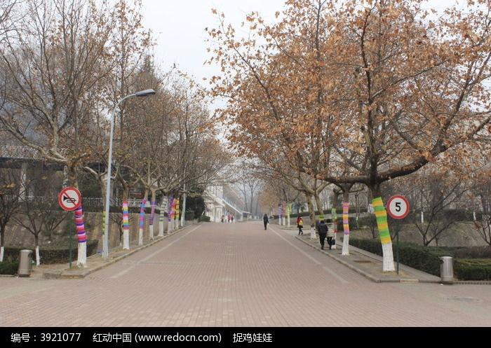 彩色树的街道