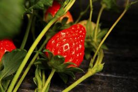 红草莓素材