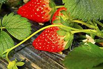 红草莓图片