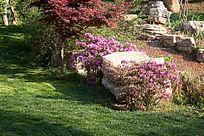 景区公园中的石头与鲜花