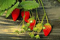 奶油草莓素材