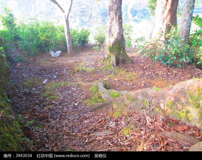 森山老林的长树根图片,高清大图_森林树林素材
