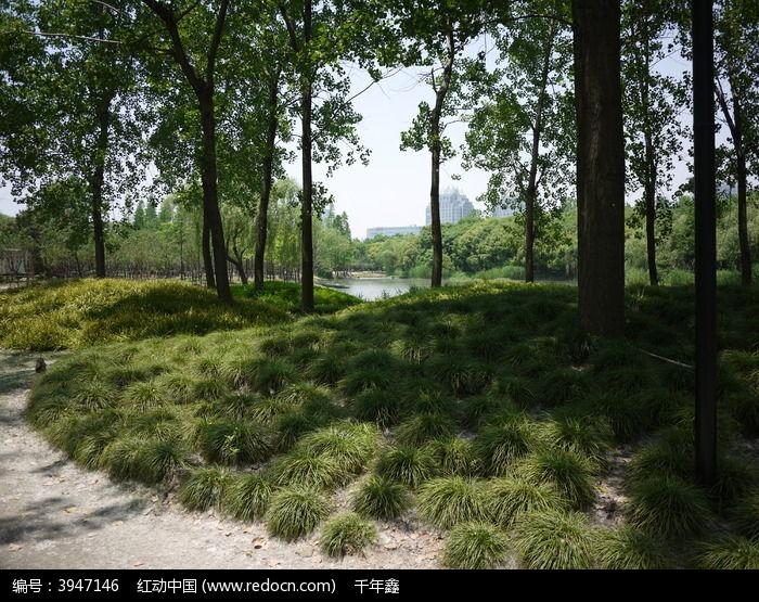 林下覆盖的地被植物图片