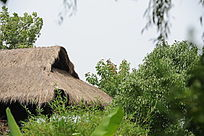 西溪湿地的茅屋顶部