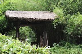 西溪湿地的茅屋门