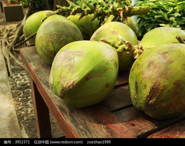原创摄影图 动物植物 树木枝叶 椰子  请您分享: 红动网提供树木枝叶