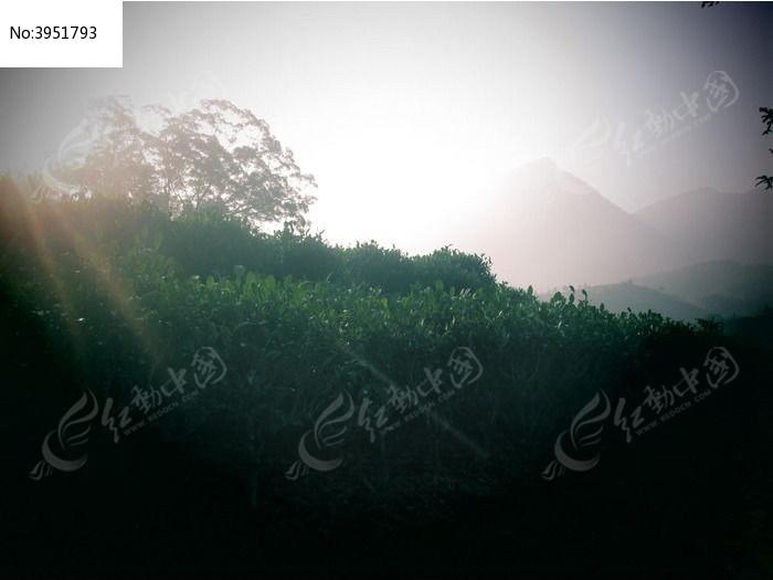 早晨阳光直射山林图片