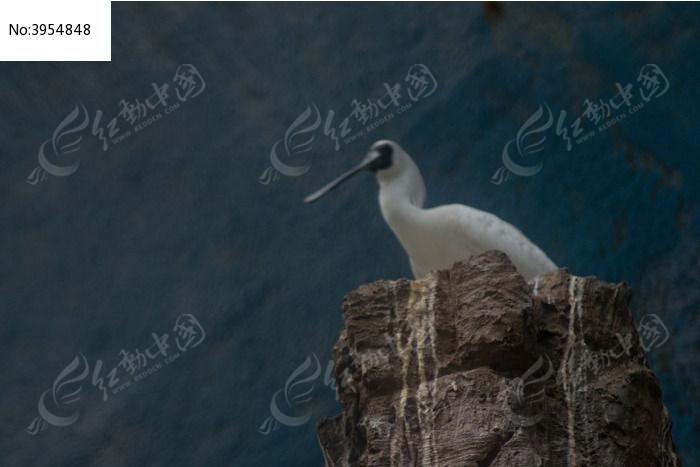 石头上鸟图片,高清大图_空中动物素材