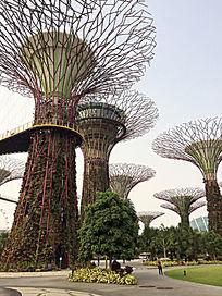 新加坡滨海湾花园景观树雕塑图片