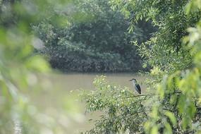野生鸟类的西溪湿地