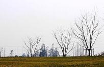 早春枯树枝