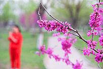 春季赏花的人