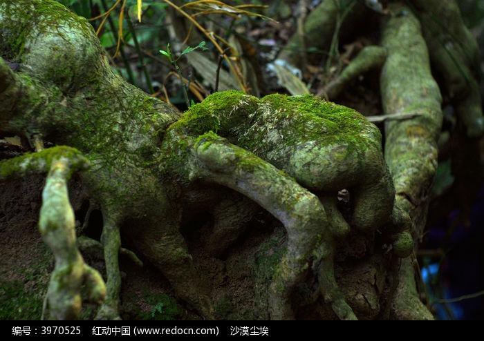 奇形怪状的树根