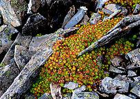 高原石缝间生长的草本植物
