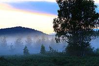 森林夜雾升腾