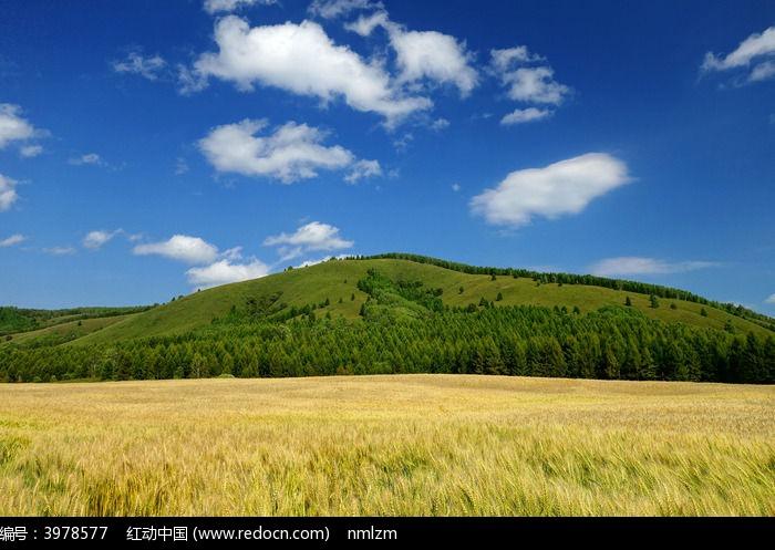 粮食 麦子 小麦
