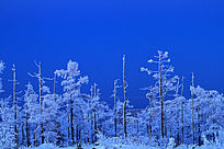 宁静的雪林