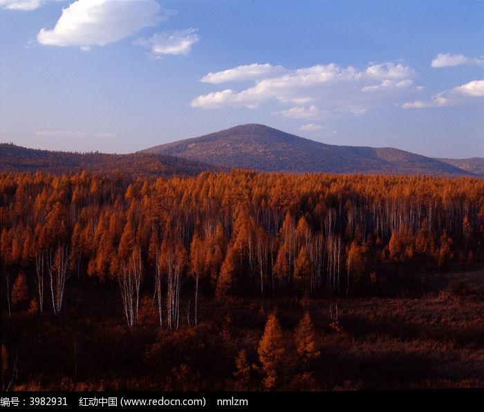 原创摄影图 自然风景 森林树林 秋季林海