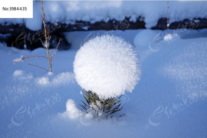 疯狂动物城兔子雪球