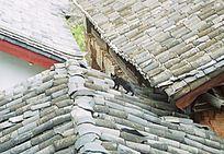 屋顶的黑猫