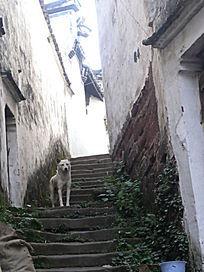 东阳诸葛八卦村的民居台阶