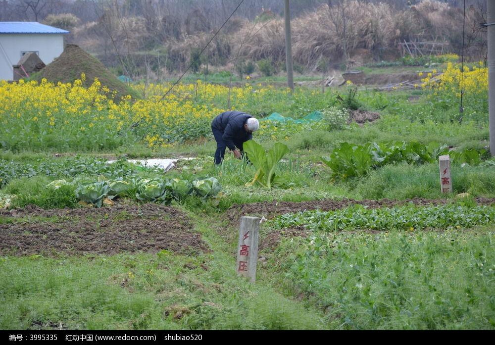 劳动着的农民图片,高清大图