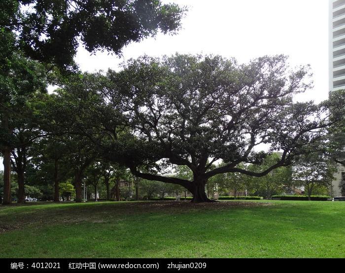 草坪榕树图片,高清大图_园林景观素材