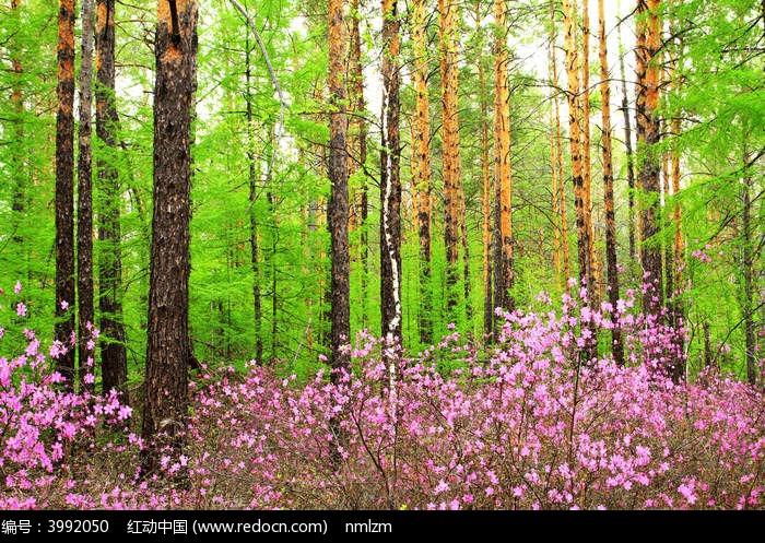 春到大森林