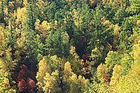 大兴安岭原始森林的色彩