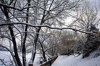 冬天河边景色